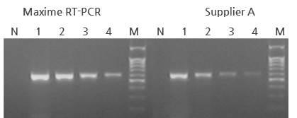 Maxime RT PCR PreMix