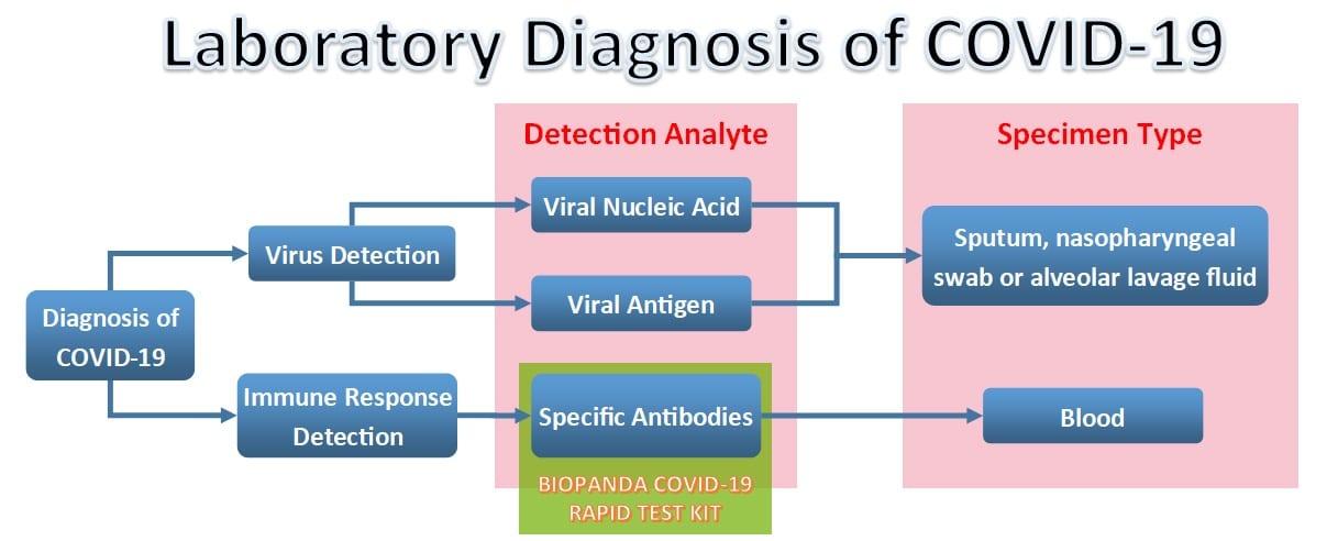 test rapido covid 19 diagnostico